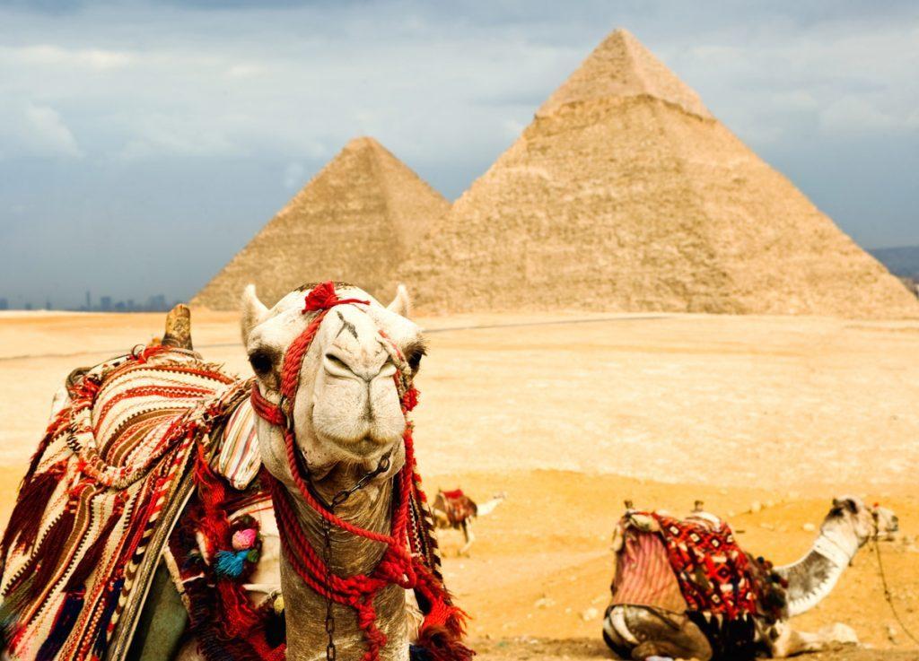 Bolsheglazye verblyudy Egipet 1024x737 1024x737 - Туры в Египет: новые вылеты и доступные цены