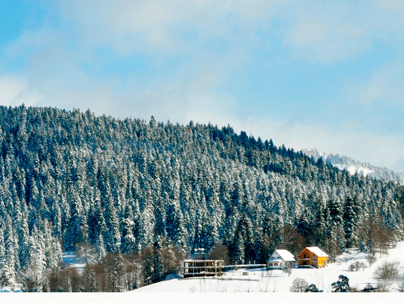 Bakuriani - Топ-3: идеи горнолыжного отдыха !