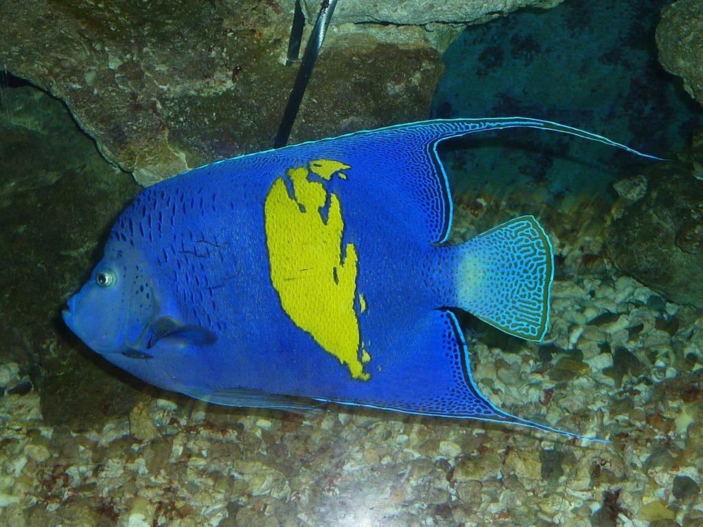 arabian angelfish 218989 1920 1024x768 - Что нужно знать об отдыхе в Хургаде