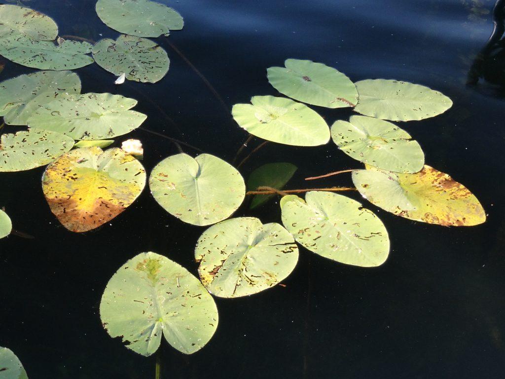 чудо озеро в балоруссии