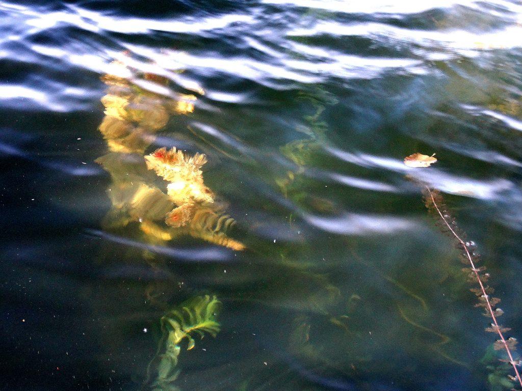 dsc00955 1024x768 - Путешествия по Беларуси: озёра Мядельщины. Что посмотреть, где остановиться?