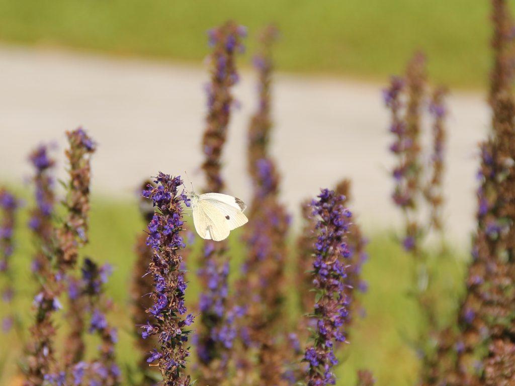 путешествия по беларуси бабочки