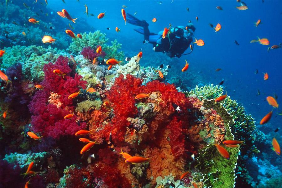 red sea diving sophie saint travelettes 1 - Топ-5 причин, чтобы побывать в Иордании